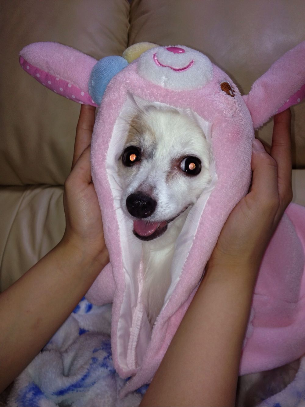 愛犬モモちゃん