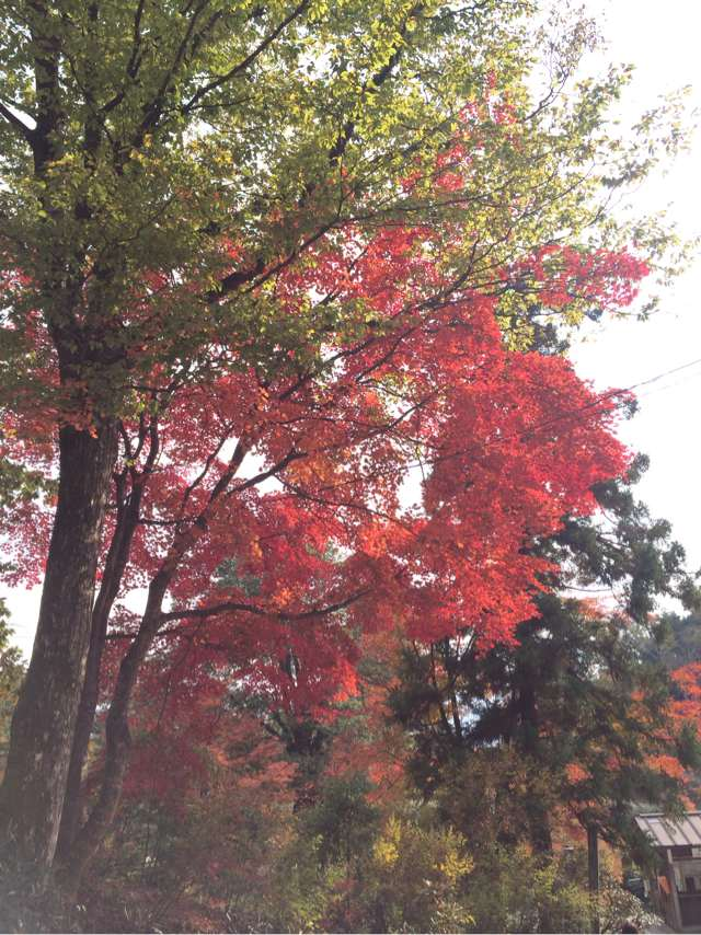 天橋立も綺麗だが紅葉も美しい